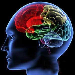 brain-2015
