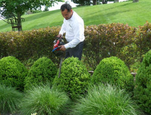 How Having Well Trimmed Trees Will Improve Property Value.